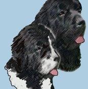 R930545_rnewfoundland_dog_portrait3_shop_thumb