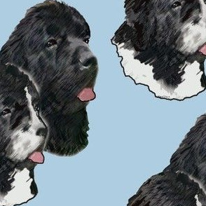 Newfoundland_Dog_Portraits