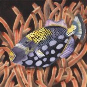 Rrrrrrrrrmom_s_watercolor_painting_of_handsome_fish__cropped_to_8_by_8__no_fill_shop_thumb