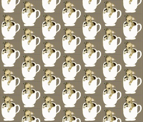 Rrrrteacup_chihuahua_shop_preview