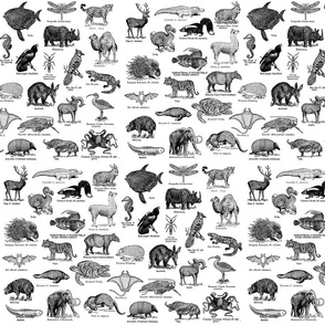 dictionary_animals_all_10