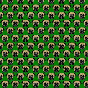 roxie6b