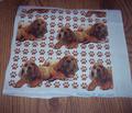 Rrrmastiff_puppies_comment_137617_thumb