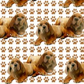Rrrmastiff_puppies_shop_thumb