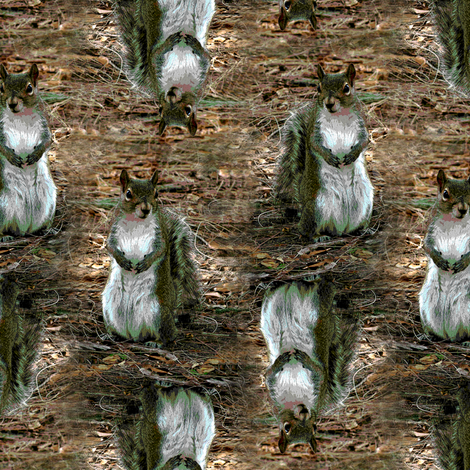 Squirrel fabric by eclectic_house on Spoonflower - custom fabric