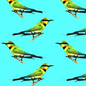 Rrrrrrainbow_bee_eaters_shop_thumb