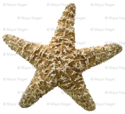 Starfish Natural