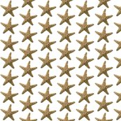 Rrrrrrstarfish-original-color_shop_thumb