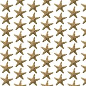 Rrrrrstarfish-original-color_shop_thumb