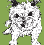 Cairn Terrier Green