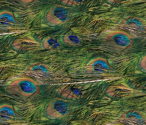 Peacocks_are_lazy_by_peacoquette_designs_shop_preview