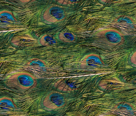 Peacocks Are Lazy fabric by peacoquettedesigns on Spoonflower - custom fabric