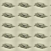 Baby Crab 1 - Vintage