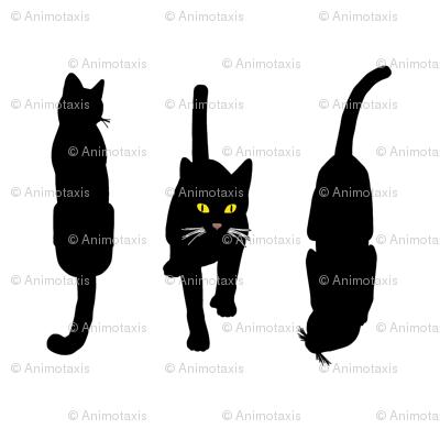 Black Cats 5, L