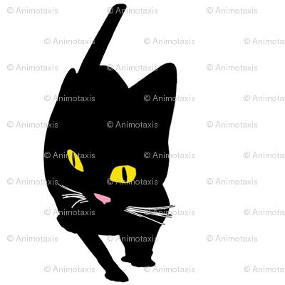 Fish Eyed Cats 1, L