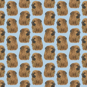 Tibetan Spaniel faces - blue