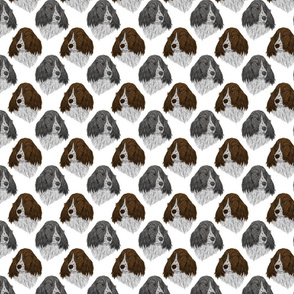 English Springer Spaniel faces