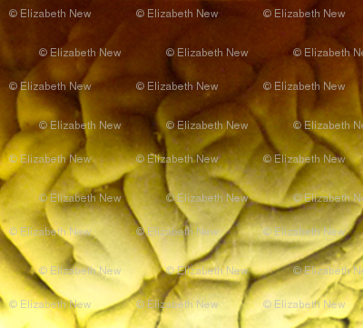 Brain texture