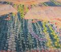 Rrjellyfishparade2500ba_comment_144687_thumb