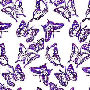 butterflyroads4