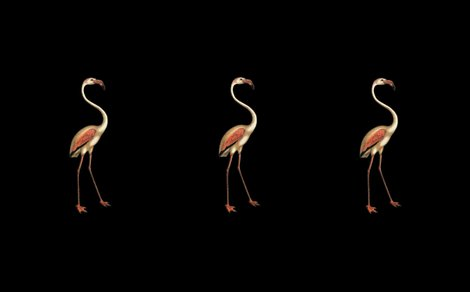 Rrflamingo_nights_reversed_shop_preview