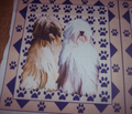 Rrtibetan_terrier_with_pawprintstwo_comment_144826_thumb