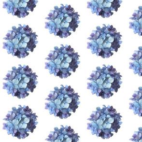 Blue Hydra Circle