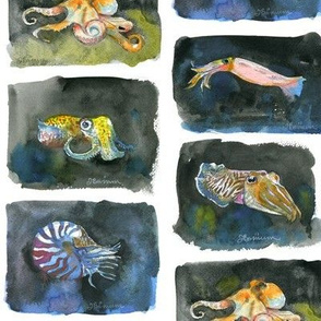 Watercolor Cephalopods