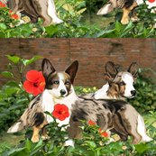 Rrrcardigan_corgi2_shop_thumb