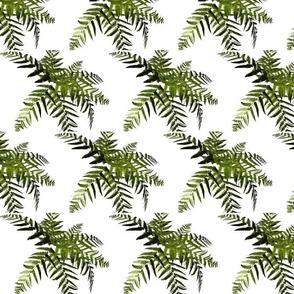 jungle_palm_trees-ed
