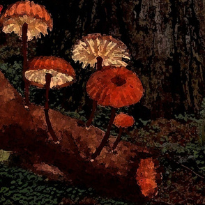 Toadstool Fairyland