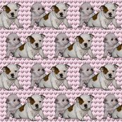 Rrrbulldog_babies_shop_thumb