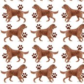 Rrrirish_setter_paws_shop_thumb