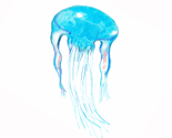 Rrjellyfish_thumb