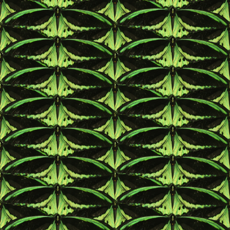 Green wings fabric by upcyclepatch on Spoonflower - custom fabric