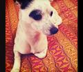 Rrrrtonga_carrot_comment_144794_thumb