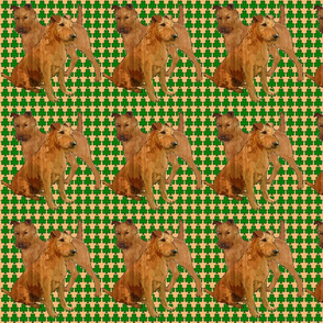 irish_terriers_with_shamrocks