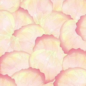 rose petals peach