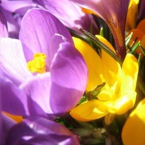 Spring Bursts Forth