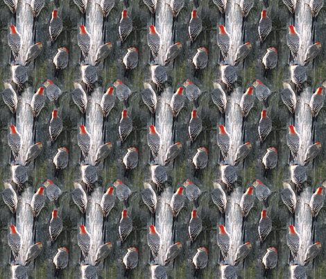 Redbelly Woodpecker fabric by eclectic_house on Spoonflower - custom fabric