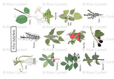 Anna's Herbs - Tea Towel