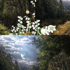 path to the forest and a dove with lilies