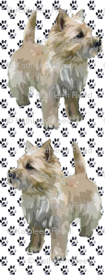 Cairn Terrier Paws
