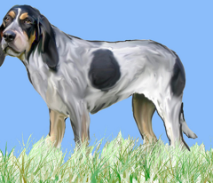 Rrrrbluetick_coonhoundnew_comment_152579_preview