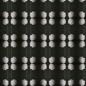 Hoya Pinstripe