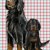 Rrrrrrrgordon_setter_best_shop_thumb
