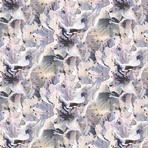 Pale blue rodondendron