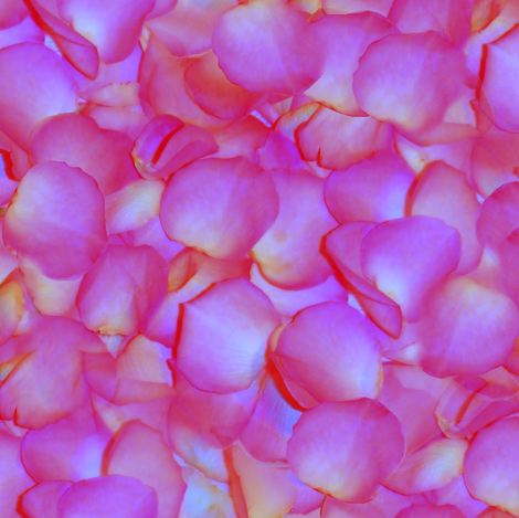 Martha's Petals fabric by peacoquettedesigns on Spoonflower - custom fabric