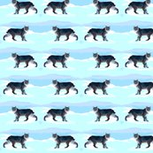 Bobcats_prowling_shop_thumb