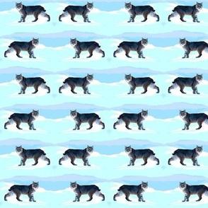 Bobcats Prowling